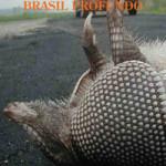 BRASIL-PROFUNDO-Stefano-Coali